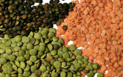 Palouse Lentils and Eye Care